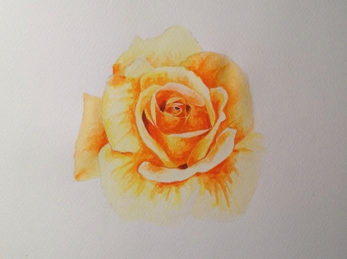 First Rose [photo'd from my garden]